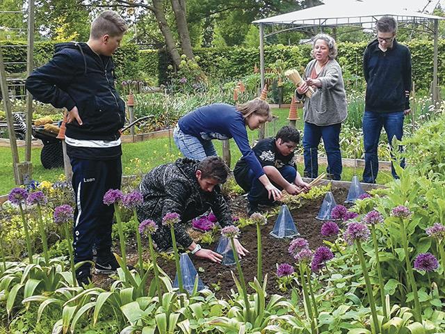 Kartoffelprojekt - die jungen Triebe werden mit den Hauben geschützt.