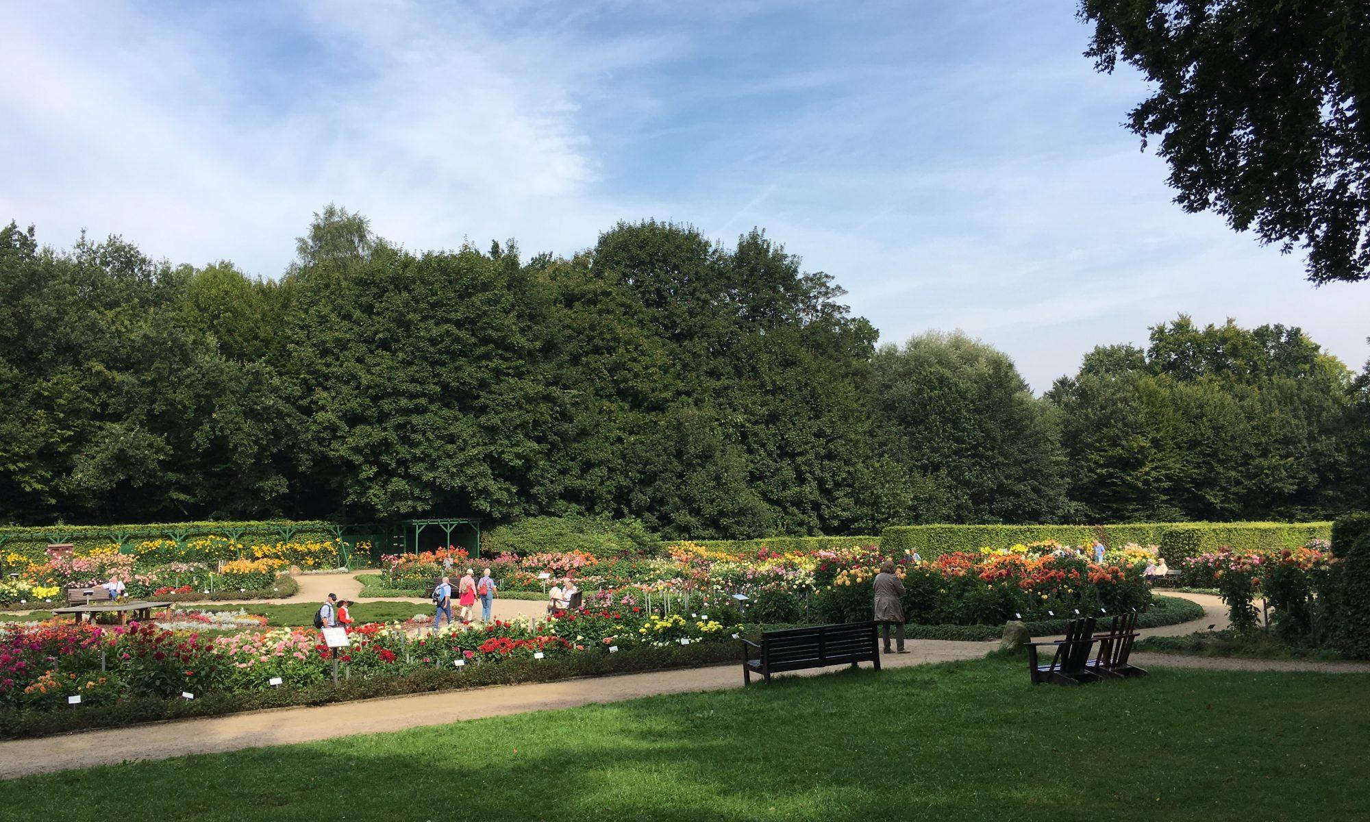 Dahliengarten in Hamburg