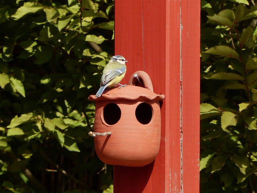 Meisen am Vogel-Futtertopf