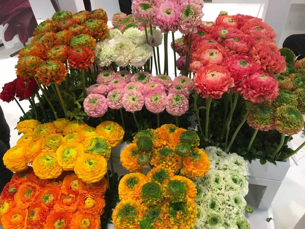 Internationale Pflanzenmesse