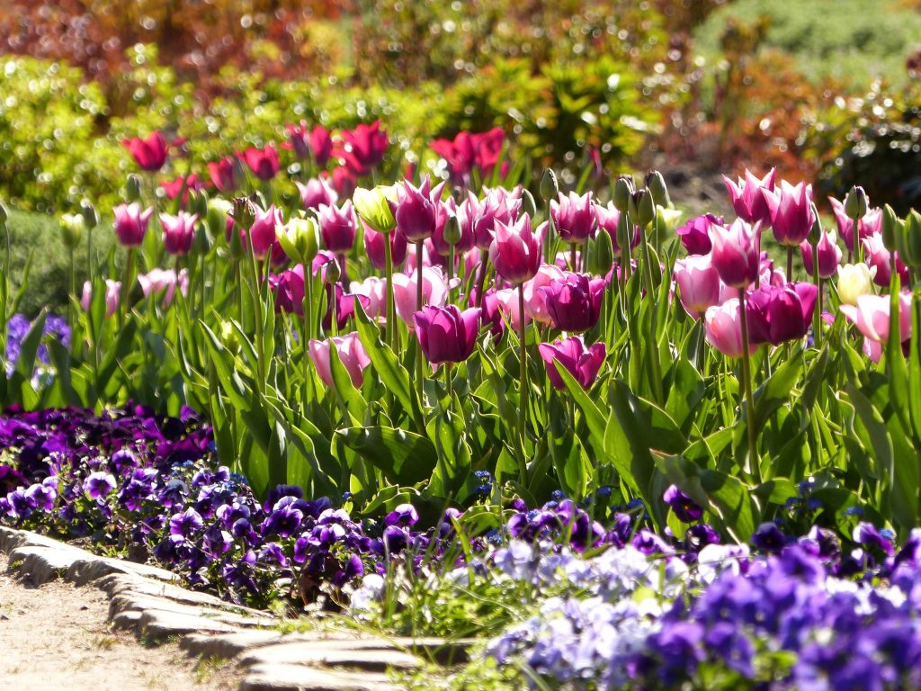 Arboretum Ellerhoop