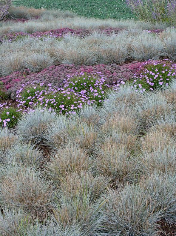 Gräser als Bodendecker
